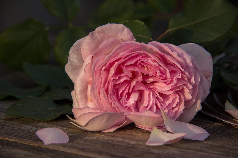 Brioche extra moelleuse & gonflée rose