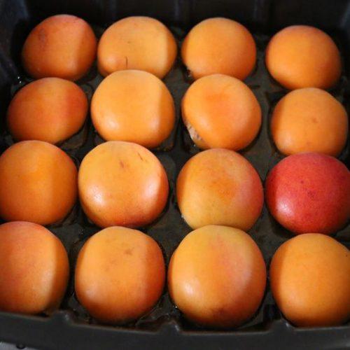 moelleux-aux-abricots-moule tablette flexipan demarle