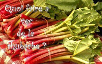 quoi faire avec de la rhubarbe index de recettes