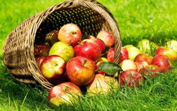 quoi faire avec des pommes index de recettes