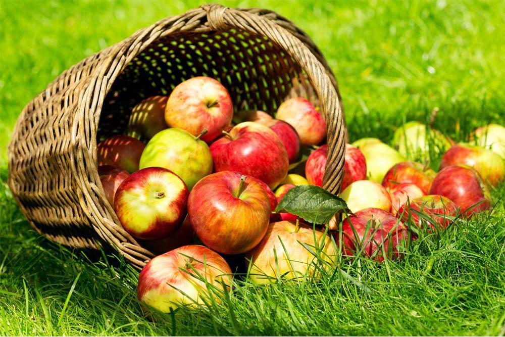 Quoi faire avec des pommes