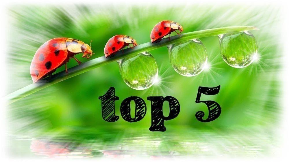 Top 5 – Août 2020
